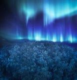Noordelijke Lichten boven het hout Royalty-vrije Stock Afbeeldingen