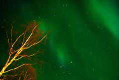 Noordelijke Lichten boven rivier Royalty-vrije Stock Afbeeldingen