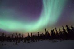 Noordelijke Lichten die over pijnboombomen wervelen stock afbeeldingen