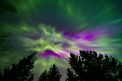 Noordelijke lichten en boombovenkanten stock foto