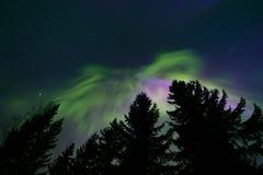 Noordelijke lichten en boombovenkanten stock afbeelding