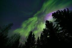 Noordelijke lichten en boombovenkanten stock afbeeldingen