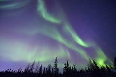 Noordelijke lichten en bos stock foto