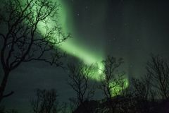 Noordelijke lichtstralen achter boombovenkanten in Tromso stock afbeelding