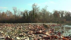 Noordelijke Waterthrush baadt in meer De herfst Op de kust zijn droge bladeren stock footage