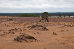 Noordelijke woestijn royalty-vrije stock foto's