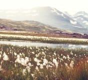 Noordpool bloemen Stock Afbeelding