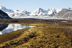 Noordpool de zomerlandschap - rendier op toendra Stock Afbeelding