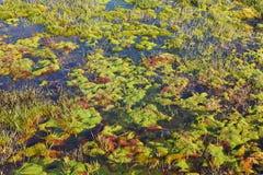Noordpool mos royalty-vrije stock afbeelding
