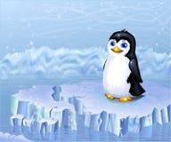 Noordpool pinguïn Stock Foto's