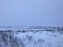 Noordpool toendralandschap Stock Foto