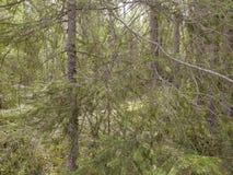 Noords bos stock foto