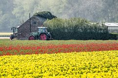 Two tractors, farm buildings and tulips stock photos