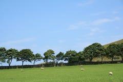 Noors landschap stock afbeelding