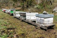Noorse bijenbijenstal Stock Foto