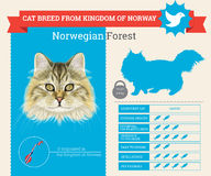 Noorse Forest Cat-rasseninfographics royalty-vrije illustratie