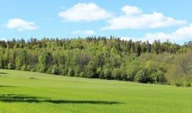Noorse hout en gebieden Stock Fotografie