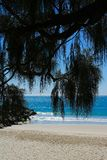 Noosa Beach with palm fronds in foreground - portrait image royalty free stock image