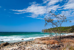 Noosa Beach - Queendsland - Australia Royalty Free Stock Images