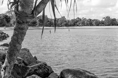 Noosa flod fotografering för bildbyråer