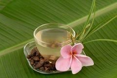 Nootgras, Coco-rotundus L van grascyperus Thee voor gezondheid stock afbeelding