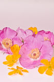 Nootka nam en boterbloemen toe royalty-vrije stock fotografie