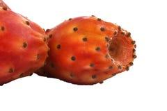 Nopal or cactus White Background Macro Stock Photo
