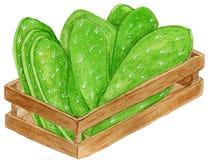 Delicious Mexican nopales stock illustration