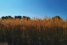 nopeople för natursommarbakgrund arkivfoto