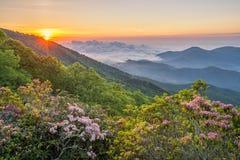 Nord Carolina, alba, alloro di montagna Immagini Stock
