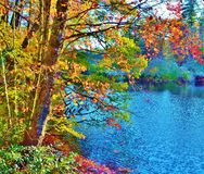 Nord-Carolina Fall Foliage Stockbilder
