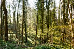Nord de la maleza del bosque de Europa en primavera fotos de archivo libres de regalías