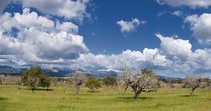 Nord di Majorca Immagine Stock