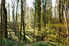 Nord Europa lasowy porośle w wiośnie zdjęcia royalty free
