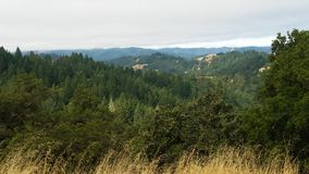 Nord-Kalifornien-Rothölzer Stockfotos