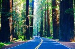 Nord-Kalifornien-Rotholz Forest Road Stockbild