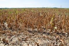 Nord-Mississippi-Sojabohnen-Ernte 2016 lizenzfreies stockbild