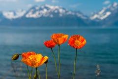 Nord-Norwegen-Orangenblumen Lizenzfreies Stockbild