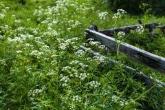 Nord by på sommar, gräs, blommor, trästaket Royaltyfri Fotografi