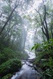 Nord-Thailand Doi Intanon Nationalpark ChiangMai mit der Verschiedenartigkeit, die für Tourismus biologisch und überrascht worden lizenzfreie stockfotografie