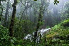 Nord-Thailand Doi Intanon Nationalpark ChiangMai mit der Verschiedenartigkeit, die für Tourismus biologisch und überrascht worden stockfotografie