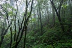 Nord-Thailand Doi Intanon Nationalpark ChiangMai mit der Verschiedenartigkeit, die für Tourismus biologisch und überrascht worden lizenzfreies stockbild