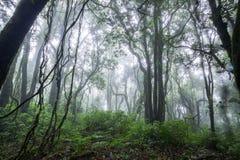 Nord-Thailand Doi Intanon Nationalpark ChiangMai mit der Verschiedenartigkeit, die für Tourismus biologisch und überrascht worden lizenzfreie stockbilder