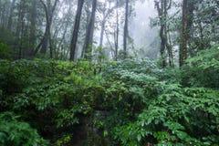 Nord-Thailand Doi Intanon Nationalpark ChiangMai mit der Verschiedenartigkeit, die für Tourismus biologisch und überrascht worden stockfotos