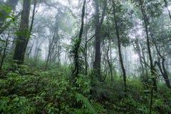 Nord-Thailand Doi Intanon Nationalpark ChiangMai mit der Verschiedenartigkeit, die für Tourismus biologisch und überrascht worden lizenzfreies stockfoto