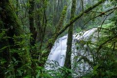 Nord-Thailand Doi Intanon Nationalpark ChiangMai mit der Verschiedenartigkeit, die für Tourismus biologisch und überrascht worden stockbild