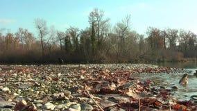Nord-Waterthrush badet im See Herbst Auf dem Ufer sind trockene Blätter stock footage
