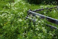 Nord wioska przy latem, trawa, kwiaty, drewniany ogrodzenie Obraz Stock