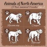 Nordamerika-Tier- und Tierbahnen, Abdrücke vektor abbildung