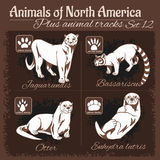 Nordamerika-Tier- und Tierbahnen, Abdrücke stock abbildung